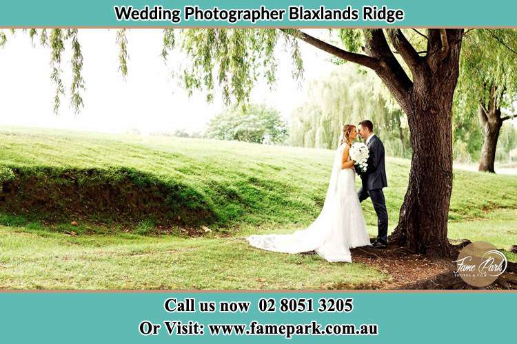 Photo of the Bride and Groom Under the tree Blaxlands Ridge NWS 2758